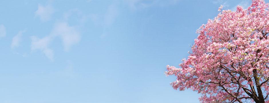 春になったら…
